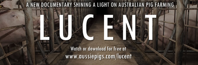 Lucent: A new documentary shining a light on Australian pig farming