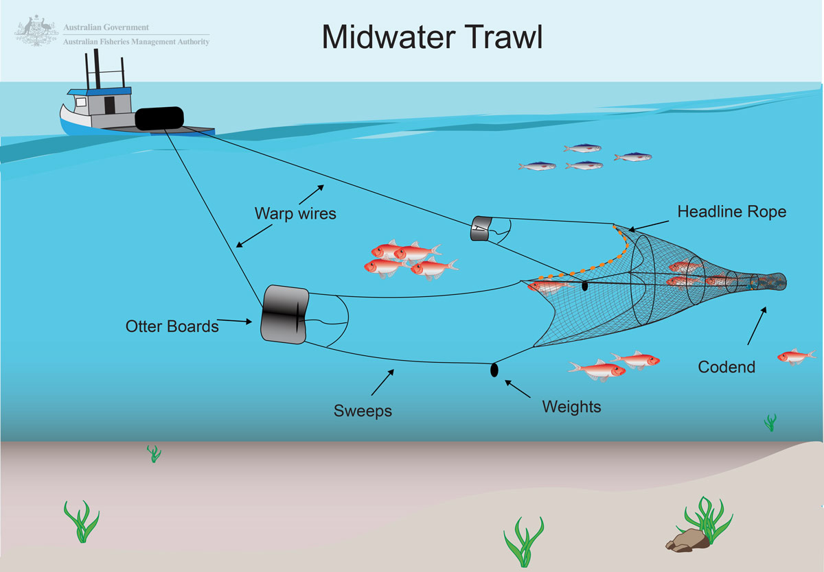 Document Midwater Trawl Scalefish Sector Graphic Aussie