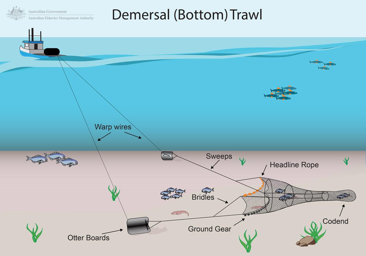 Document: Demersal Trawl Graphic - Aussie Farms